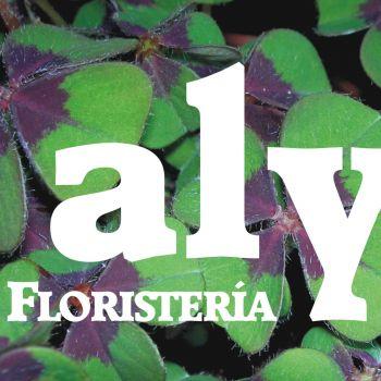 alyflor